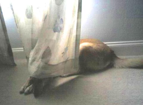 Jasmin hiding in the curtains.